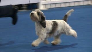 Dog World/arden Grange Top Dogs 2012