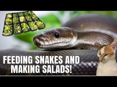 Feeding My Snakes And Prepping My Rabbits Salads!   Vlogmas Day 2