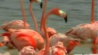 Тысячи фламинго сделали Мексику розовой