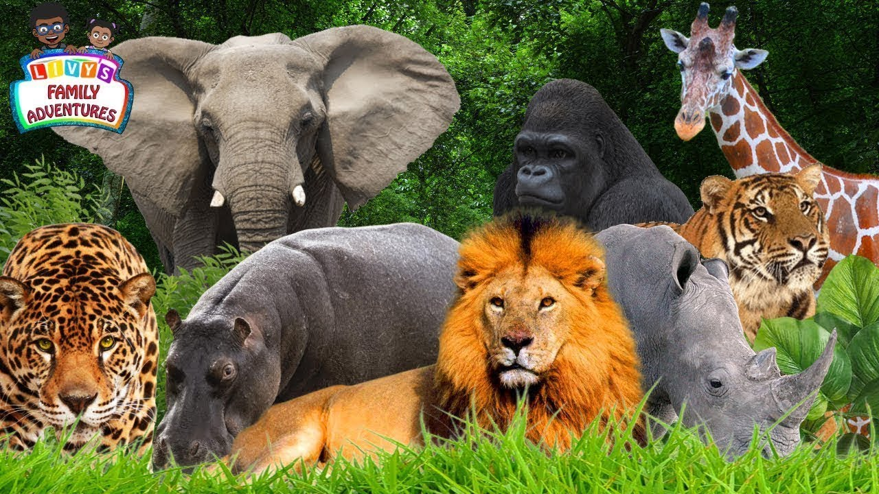 learning jungle animals jungle animals names and sounds youtube