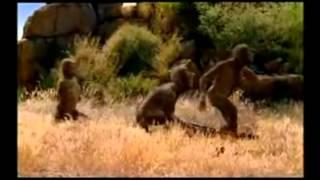 Gambar cover Australopithecus  Alimentación1