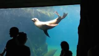 Seal being seally. Smithsonian Zoo, DC