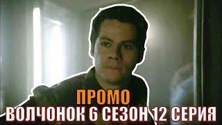 ВОЛЧОНОК 6 СЕЗОН СУПЕР - ТИЗЕР