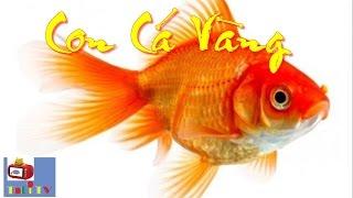 Cá Vàng Bơi ♪ Hai Vây Xinh Xinh ♪♪ Nhạc Thiếu Nhi Bố Mẹ Hát