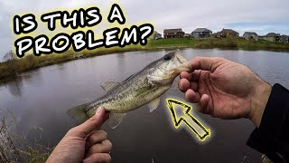 The PROBLEM That NOBODY Wants to Talk About in Bass Fishing How to Justify Catching Dinks