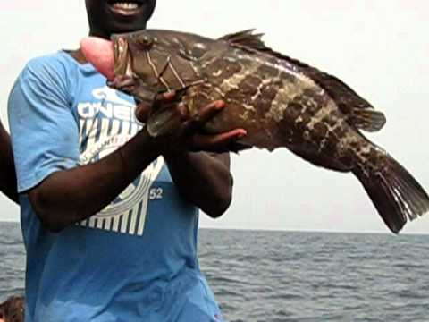 Freshly Caught Grouper - 20 Miles offshore of Tema, Ghana
