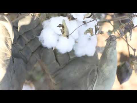 ANVIL Knitwear USA - Organic Cotton Manufacturing