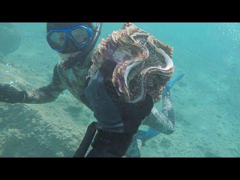【潜水漁】海底から捕まえた巨大人喰い貝がまさにアレの味だった!