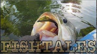 FishTales: The Big Fish Brazos