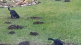 mole extermination :)