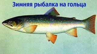 Зимняя рыбалка на гольца на Кольском полуострове(Ловозеро)(Рыбалка на кольском полуострове паблик вконтакте:http://vk.com/public117046548., 2016-03-16T19:59:51.000Z)