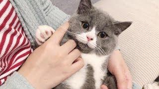 猫咪每天都神秘失踪几小时主人查看监控才发现猫咪的秘密