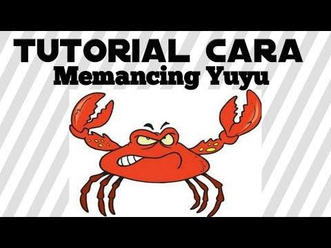Tutorial Cara Memancing Yuyu