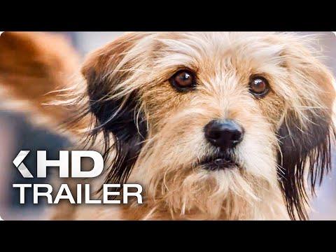 BENJI Trailer (2018) Netflix