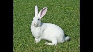 Кролик ,который гуляет сам по себе!