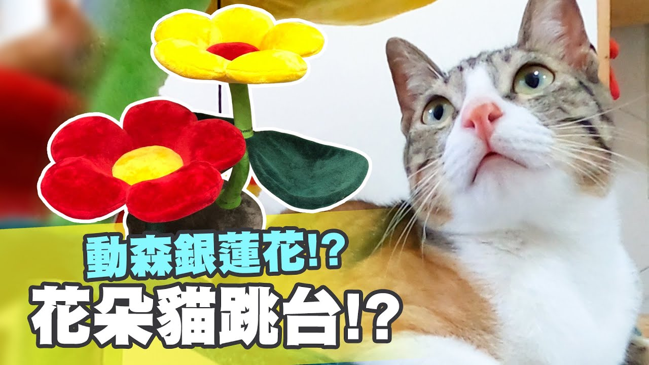 【辛卡の屁貓日記】#8 動森銀蓮花!? 花朵貓跳台!?