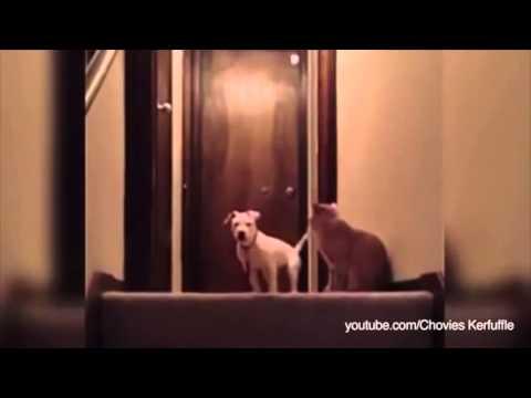 wenn hunde angst vor katzen haben youtube