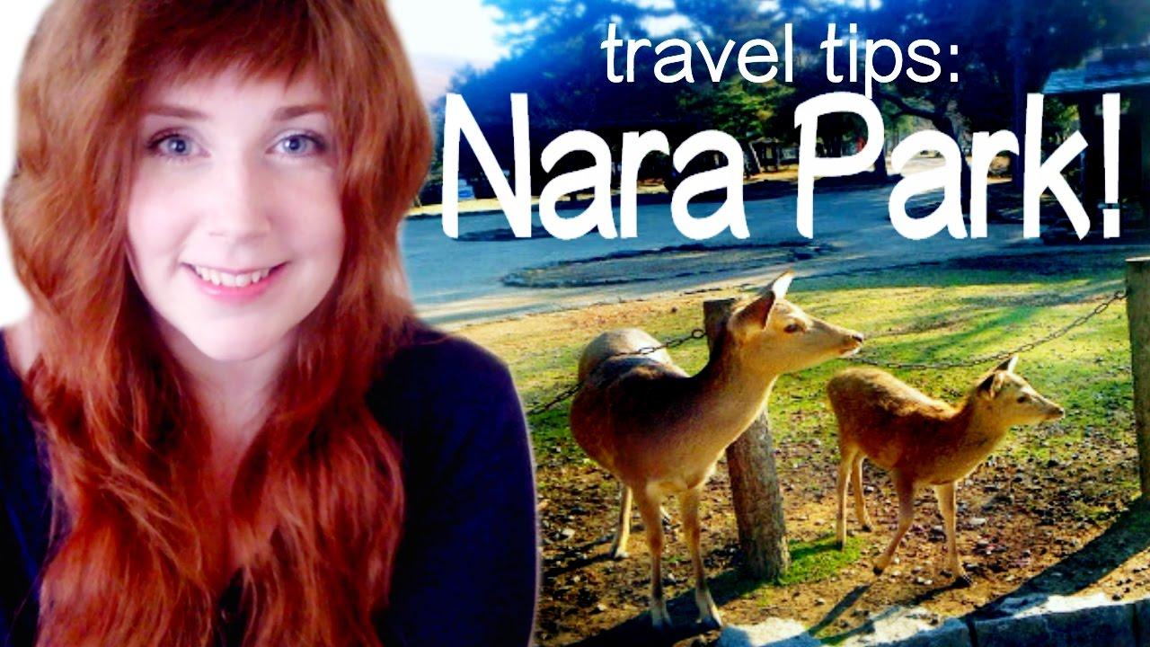 Travel Tips: Nara City & Nara Park | Nara, Japan