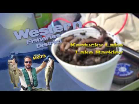 Fishing Report - May 15th, 2019