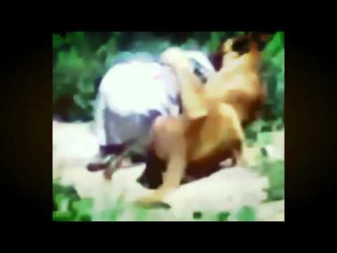 Human Eat By Tiger & Lion Attack Kabul Zoo Afghanistan