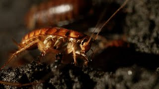 Filming Inside a Cave Full of Cockroaches   Eden: Untamed Planet   BBC Earth