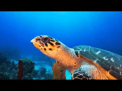 Dive Stuart Cove's Dive Bahamas!