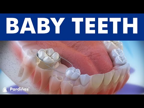 Baby teeth and the use of space maintainers ©