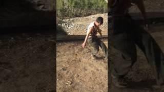 رقص اجنبي يمني
