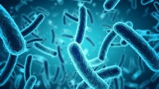 Flesh-Eating Bacteria: What is it?