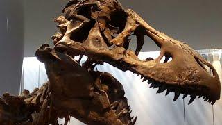 豊橋自然史博物館では12体の恐竜の全身骨格をみることができます。その大きさに驚きました