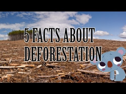 5 facts about Deforestation - YouTube