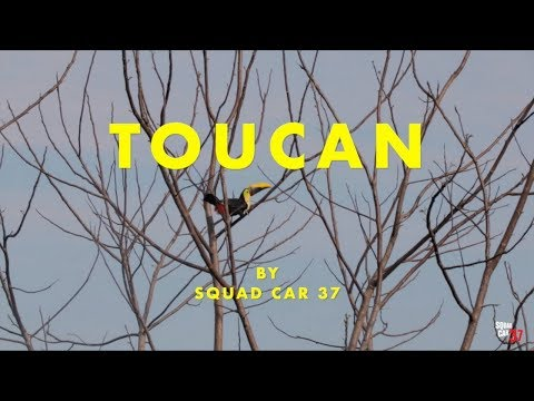 Toucan Music Video - Written and Recorded in Costa Rica