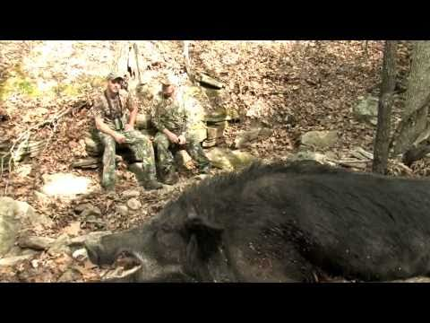 Stone Creek Hunting Ranch - Ron Hlavacek's 300lb Boar