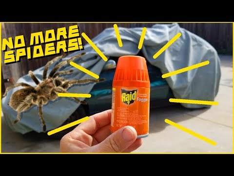 How to get rid of little black ants in my car