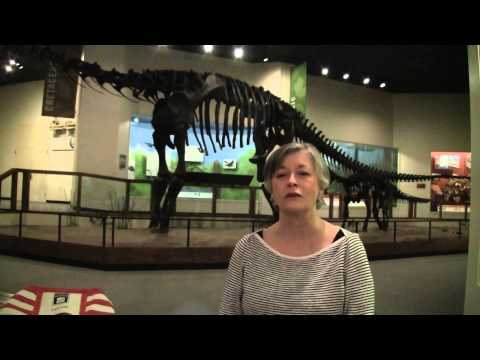 The Docent Experience at The Museum of Texas Tech University
