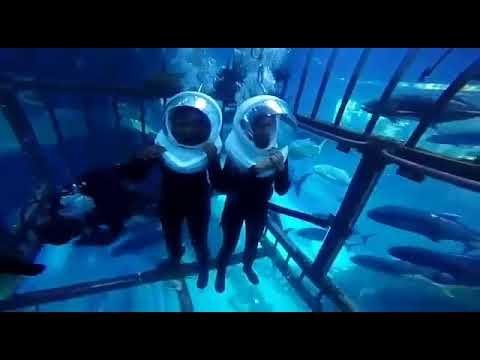 ඩුබායි මින් මැදුරේ වතුරයට අපේ කෙල්ලෝ දෙන්නෙක් | Dubai aquarium and underwater zoo