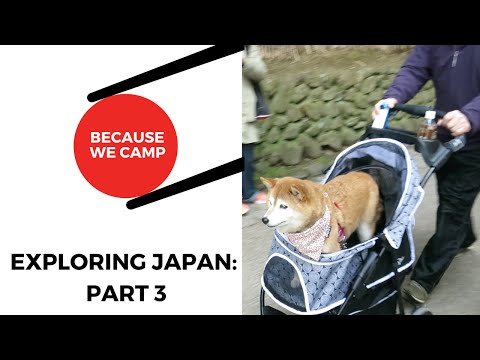 Exploring Japan Part 3: Kyoto | Hospital | Fushimi Inari Taisha | Bamboo Forest | Izakaya