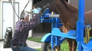 Equine Dentistry Done Correctly