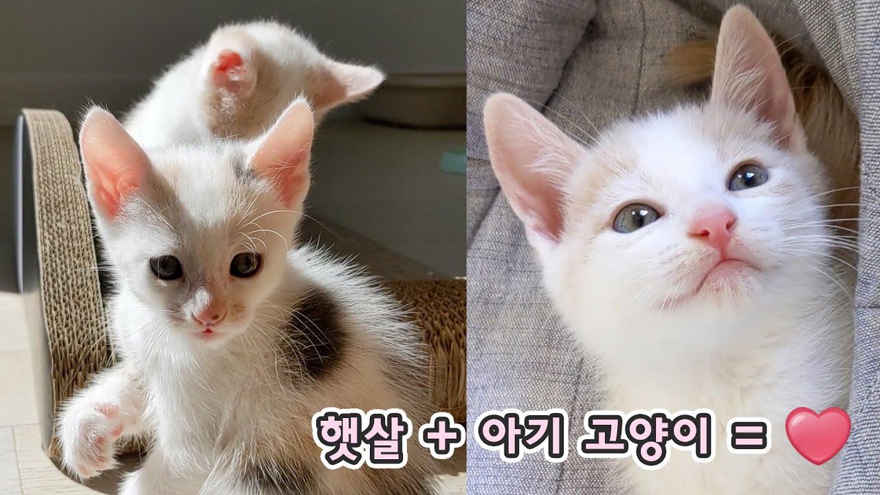 햇살 받는 아기 고양이 얼마나 예쁘게요? feat. 최약체 크림이