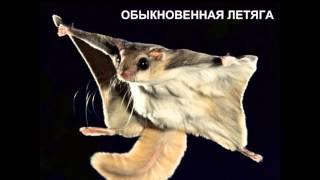 Позвночные животные из красной книги