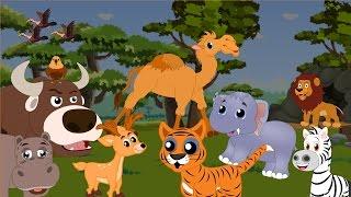 Dzikie zwierzęta | Materiał edukacyjny dla dzieci | Swiat Dzieci | Słoń, lew, wilk, niedźwiedź