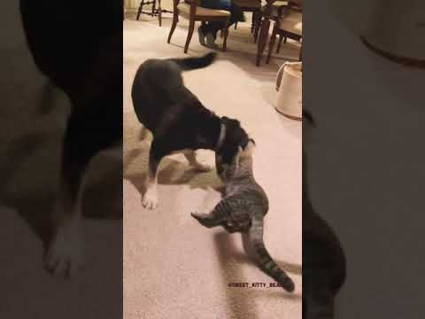 cute cats and dogs – Tiktok Cutest Cats and Dogs