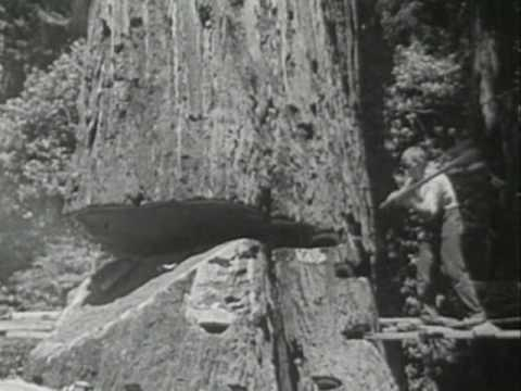 Redwood Lumber Industry, Northern California - 1947