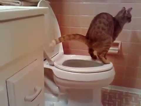 un chat qui fait ses besoins au toilettes youtube. Black Bedroom Furniture Sets. Home Design Ideas