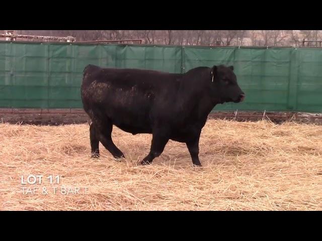 Taliaferro Angus \u0026 T Bar T Angus Ranch - 11