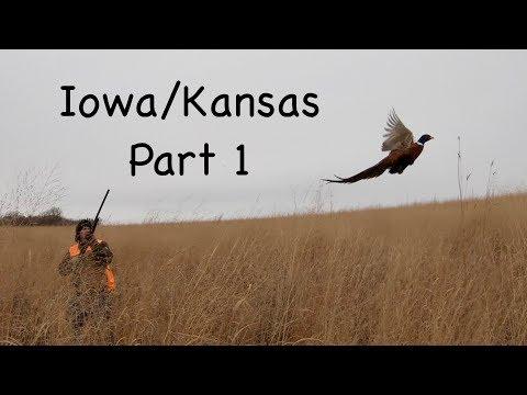 Iowa Pheasant & Kansas Quail 2018-part 1