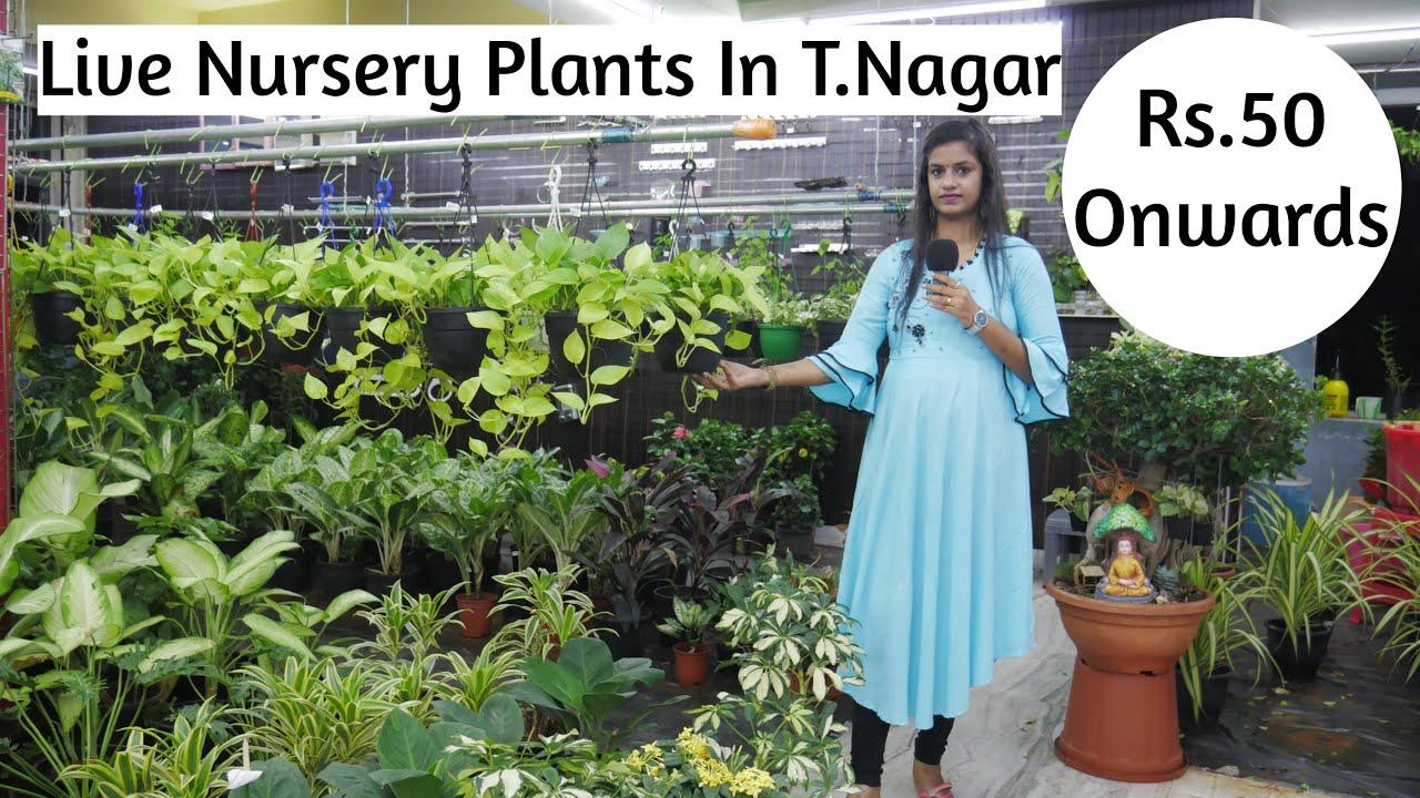 சென்னையில் முதல்முறையாக Showroomல் Nursery garden live Plants| Kanchi Plaza| T.Nagar