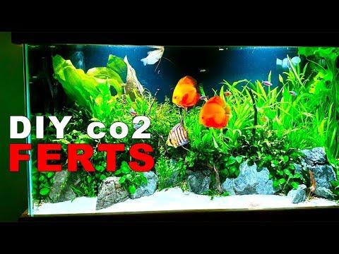 55 Gallon Planted Discus Aquarium || Adding DIY co2 & Ferts || Big Maintenance