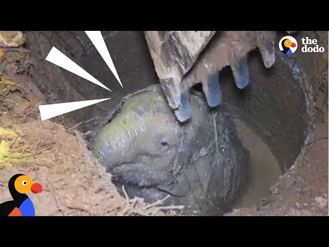 Elephant Mom Crying for Help Leads Rescuers To Her Trapped Baby | The Dodo