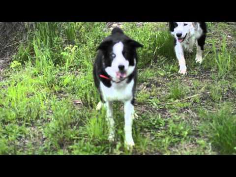 How To Train Your Dog To Retrieve Birds
